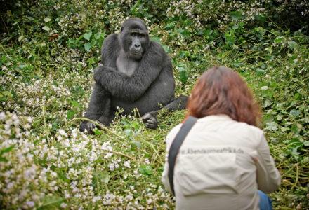 Gorillatracking: Den sanften Riesen ganz nah