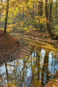 Indian Summer in Norddeutschland: Strahlend schöne Heimtlandschaften