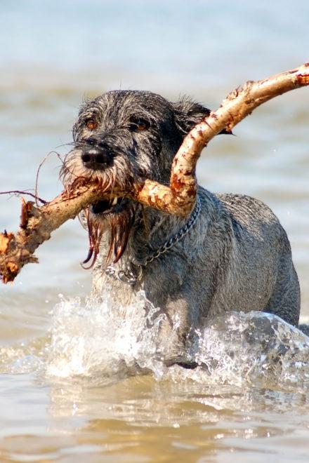 Hundeurlaub Ruegen: Auszeit mit dem besten Freund | Reise-Empfehlung
