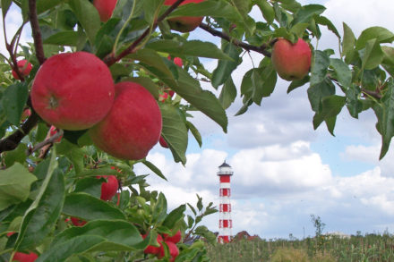 Urlaub Altes Land am Elbstrom: Radtouren und Obstroute